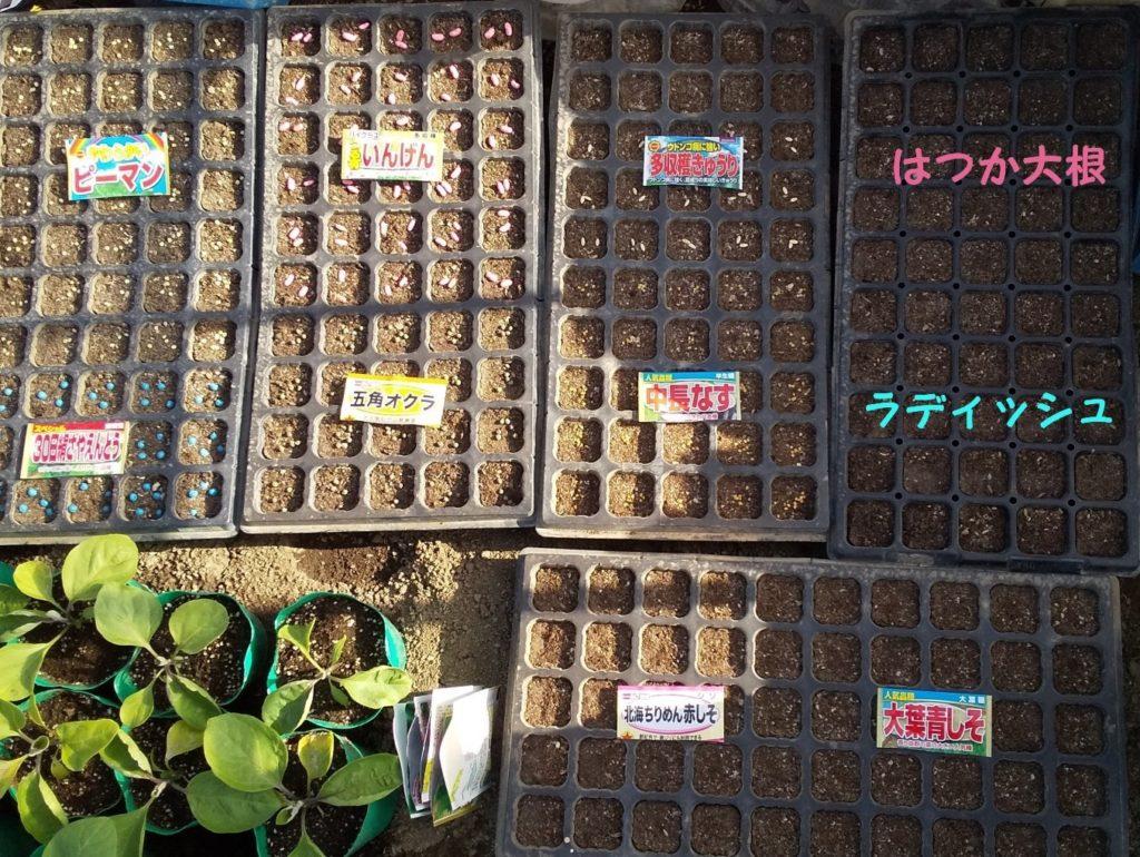 野菜の種まき